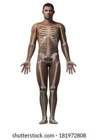 anatomy of an african american man - skeleton