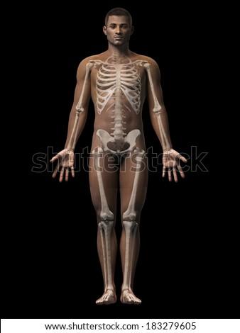 Anatomy African American Man Skeleton Stock Illustration 183279605