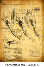 Anatomy art by Leonardo Da Vinci from 1492 on textured background.