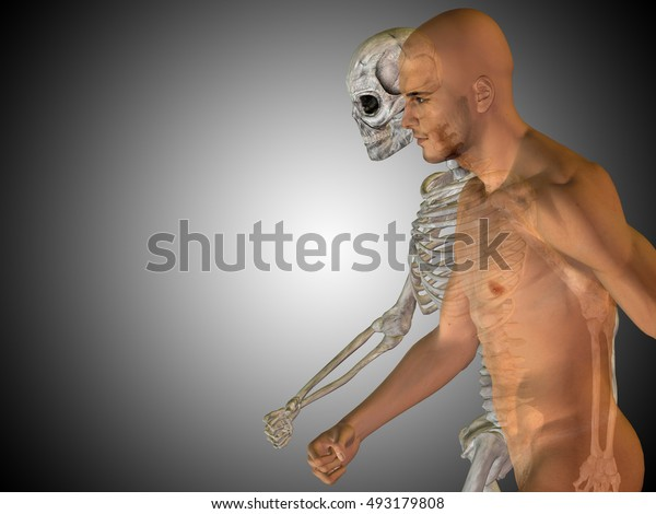 Anatomy concept 3D illustration of human man medical health body chest, head gray bright background for medical science health male biology medicine bone anatomical muscular system face cranium, spine
