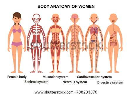 Anatomy Female Body Skeletal Muscular Nervous Stock Illustration ...