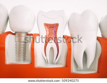 Royalty Free Stock Illustration Of Anatomy Healthy Teeth Dental