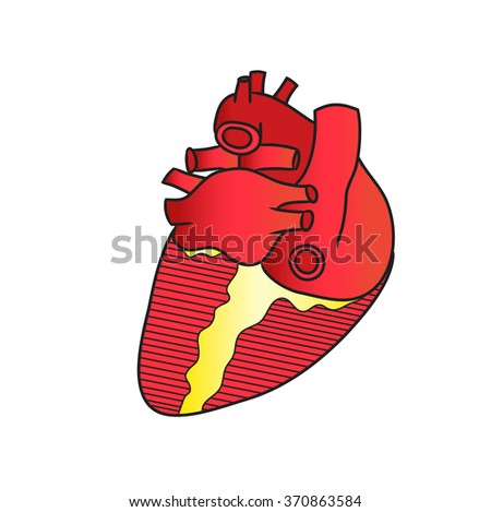 Anatomy Heart Posterior View Isolated Stock Illustration 370863584 ...
