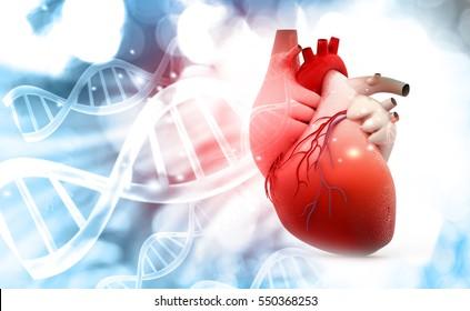 Anatomie van het menselijk hart met DNA-structuur achtergrond. 3d render