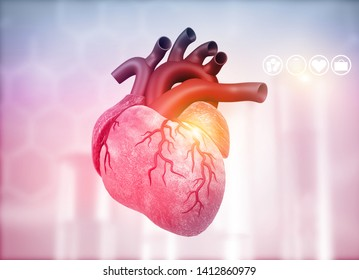 Anatomy of Human Heart on medical background. 3d render