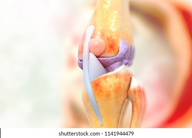 Anatomy of human knee joint. 3d illustration