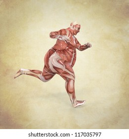 Anatomy of Man running