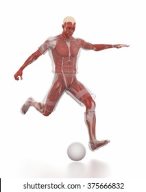 Anatomy muscle map - soccer or football