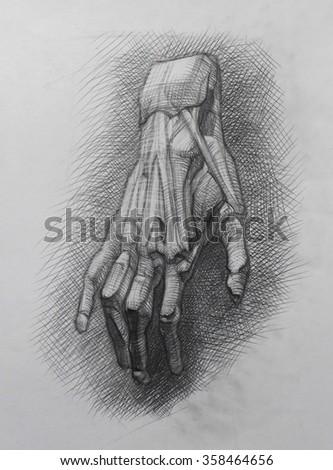 Anatomy Muscles Drawing Wrist Stock Illustration 358464656