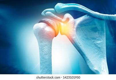 Anatomy of Shoulder , rotator cuff tear, Shoulder pain. 3d illustration