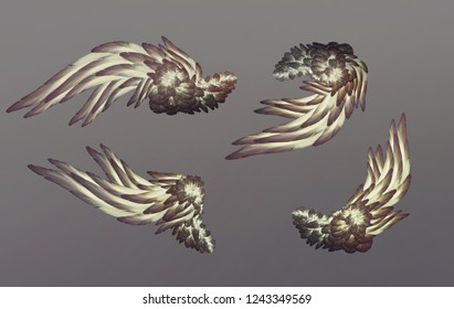 Angel wings isolated