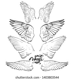 angel wings, lettering, drawing  set