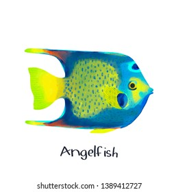 Angelfish fish animal realistic illustration