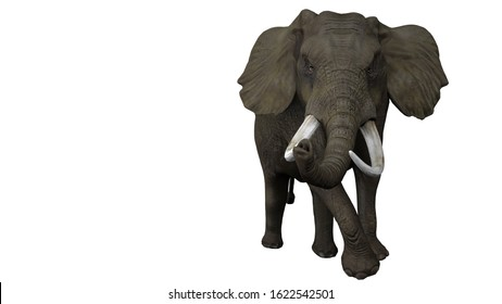 Angry and aggressive male single african elephant on white backgrund isolated 3d rendering