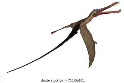 Anhanguera prehistoric bird - 3D render