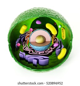 Animal cell anatomy isolated on white background. 3D illustration.