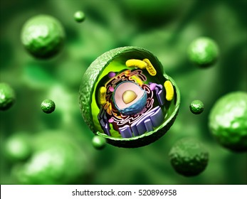 500 Animal Cell Pictures Royalty Free Images Stock Photos And