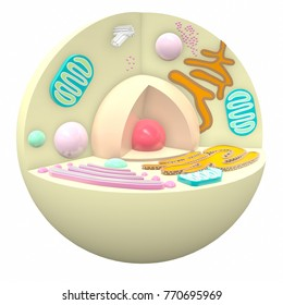 Animal Cell Biology Macro Science 3D Render.
