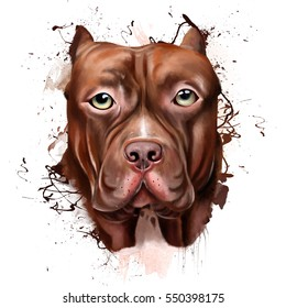 Animal collection: Dog. Portrait of a Pitbull. Closeup on a white background, with elements of squirt and drip paint.