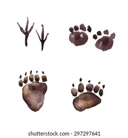Animal Footprint Track, Watercolor painting