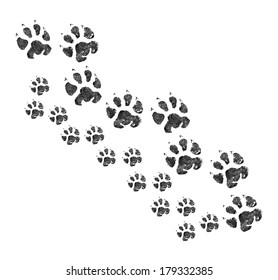 Animal footprint walking together