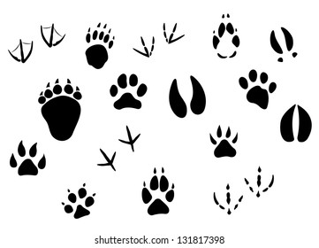 graphic regarding Printable Animal Tracks known as Animal Footprints Pics, Inventory Illustrations or photos Vectors Shutterstock
