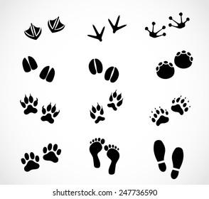 Animal and human paw and footprint set