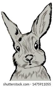 animal rabbit wool ears nature