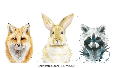 Animal set. Fox, rabbit and raccoon. Watercolour illustration on white.
