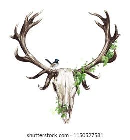 Animal Skull. Watercolor Illustration.