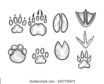 Animal tracks sketch engraving raster illustration. Scratch board style imitation. Black and white hand drawn image.