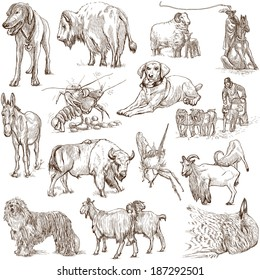 Animals around the world (collection no.5, white ) - Collection of an hand drawn illustrations. Description: Full sized hand drawn illustrations drawing on white background.