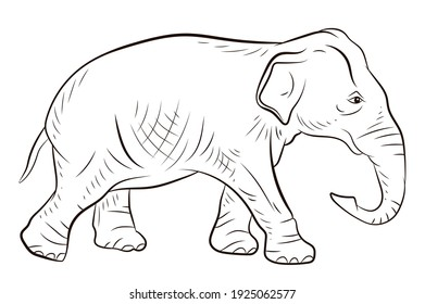 Animals. Black and white image of a large elephant, coloring book for children.