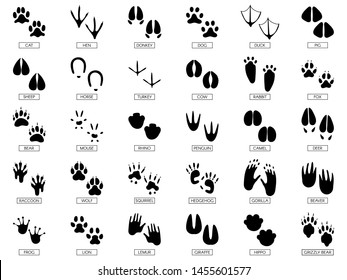 Animals footprints. Animal feet silhouette, frog footprint and pets foots silhouettes prints. Wild african animals paw walking track or footprint tracks.  illustration isolated sign set