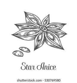 Anise star flower seed plant . Hand drawn sketch illustration isolated on white. Spicy herbs. Star anise Doodle design cooking ingredient for food, dessert. Seasoning spice herb