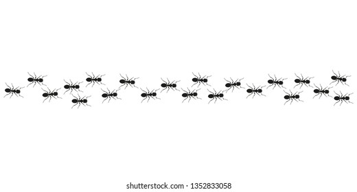 Ant trail. Ants marching or walking.