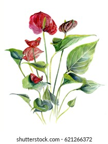 Anthurium. Watercolor Sketch hand drawing illustration