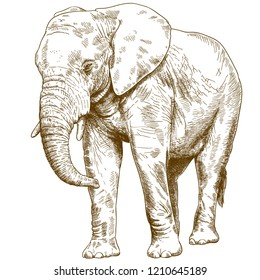 antique engraving drawing illustration of big elephant isolated on white background
