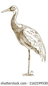antique engraving drawing illustration of white naped crane isolated on white background