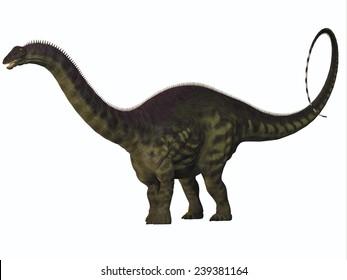 Apatosaurus on White - Apatosaurus also called Brontosaurus is a sauropod dinosaur of Western North America during the Jurassic Era.
