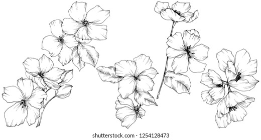 Appe blossom flowers. Black and white engraved ink art. Wild spring leaf. Isolated apple blossom flowers illustration element.