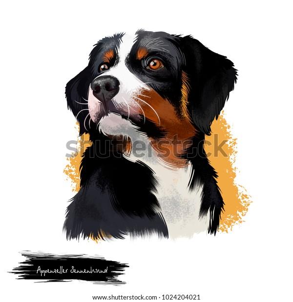 Appenzeller Sennenhund Dog Digital Art Illustration Stock