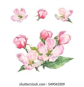 Apple blossom. Watercolor set