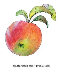 Apple with leaves isolated on white background. Drawing of an apple with watercolor pencils. Bright watercolor painting.