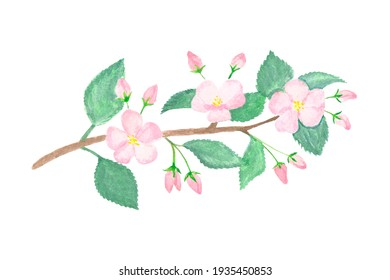 Apple Tree Branch painted in watercolor spring illustration print for T-shirt