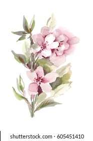 Apple Tree Flowers. Hand Painted Illustration.