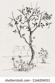 apple tree in garden with flowers and butterfly