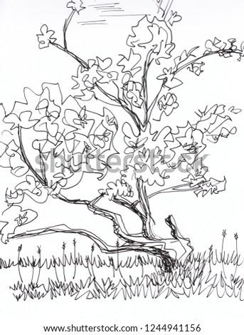 apple tree sketch drawing stock illustration royalty free stock Apple Falling apple tree sketch drawing