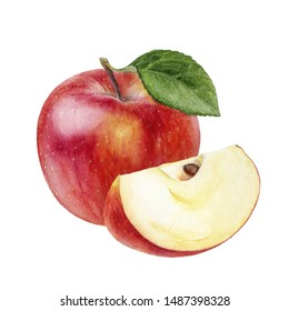 Apple watercolor illustration isolated on white background