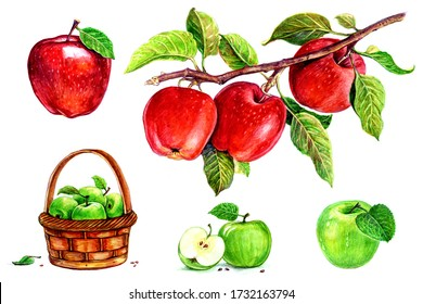 Apples in a basket, apples with a leaf, apples on a branch. Set of watercolor illustrations for labels, menus, or packaging design.